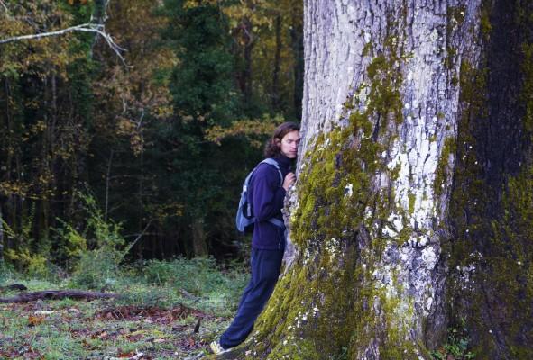 bomenknuffelaar